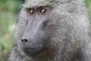 Tansania, Ngorongoro