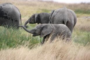 Tansania, Serengeti