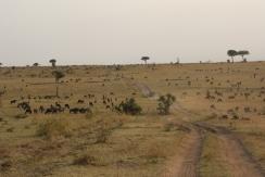 Great Migration, Tansania