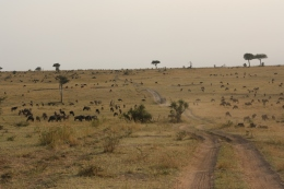 Great Migration, Tansania