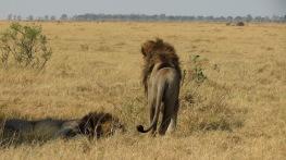Savuti, Botswana