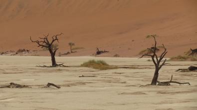 im Dead Vlei, Namibia