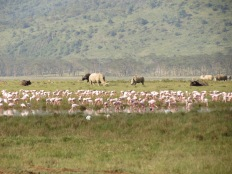 Nashörner am Lake Nakuru, Kenia