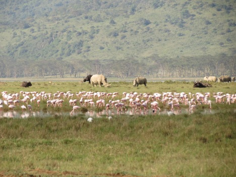 Nashörner am Lake Nakuru, Kenia