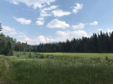 Im Jasper Nationalpark