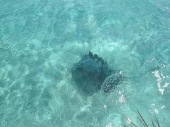 Manta Rochen Bora Bora