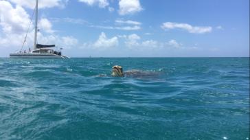 Turtle-Trip
