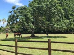 ländliches Kauai