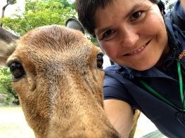 heilige Hirsche in Nara (also, da sind noch mehr) ich bin ja nicht aus Nara und auch nicht heilig.