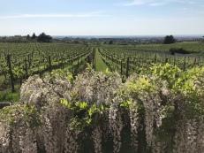 Frascati Weinprobe