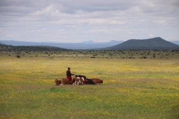 Massai Land zwischen Arusha und dem Hochland