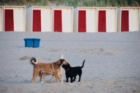 Hundeparadies hier
