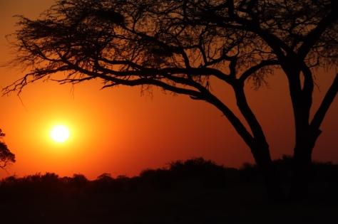 ein Sonnenuntergang in Afrika