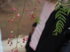 Pfeffer wächst auch in Jordanien