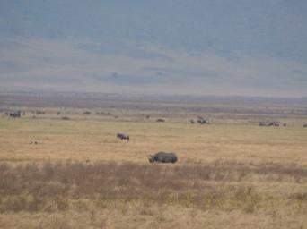 Nashorn - kifaru